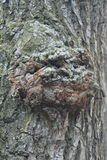 Just bark on a tree. The Scarecrow forest watching us Royalty Free Stock Photography
