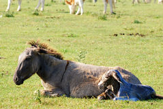 Just born little donkey Stock Image