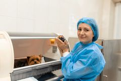Just born puppy in pet hospital. Pet healthcare concept royalty free stock photo