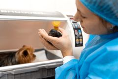 Just born puppy in pet hospital. Pet healthcare concept royalty free stock images