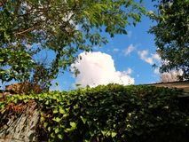 Green, sunny, leaves and branches forest vibe with clouds. Just a casual photo of green piles of  leaves and sunny blue sky Royalty Free Stock Photos
