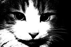 Just, a cat, black, and white, a pet Stock Image