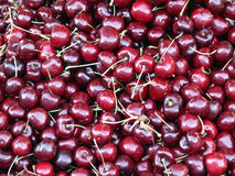 Just cherries Royalty Free Stock Images