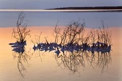 Dead Sea - Salt Clusters on Dry Bush Stock Photos