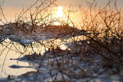 Dead Sea - Withered Bush at Dawn. Just before dawn at the famous Dead Sea in Israel. Salt clusters grouped on a withered bush break the orange hues reflected in Royalty Free Stock Photography