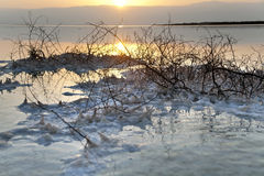 Dead Sea - Withered Bush at Dawn. Just before dawn at the famous Dead Sea in Israel. Salt clusters grouped on a withered bush break the orange hues reflected in Stock Photography