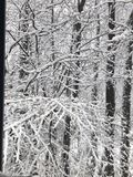 Let it snow. Just e frozen tree royalty free stock photos