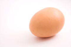 Just egg Stock Image