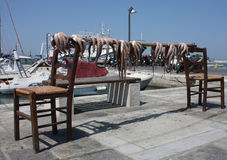 Just fished octopus stand over a drying bar. Polyps drying at sunlight between chairs royalty free stock photography