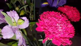 Just flowers. Flowers red purple Royalty Free Stock Images