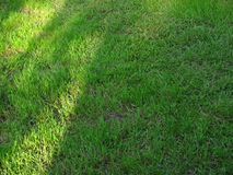 Just grass in perfect green Royalty Free Stock Image