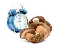 Just harvested mushrooms . boletus edulis Stock Images