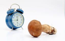 Just harvested mushrooms . boletus edulis Stock Photo