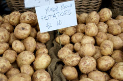 Just Harvested Potatoes royalty free stock image