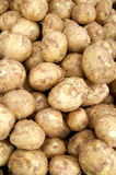 Just Harvested Potatoes Stock Photo