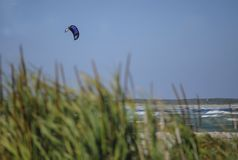 Just the kite Showing as the Surfer, disappears behind Bull-Rushes. stock photo