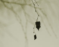 Just a leaf. Two leaves still hanging on a tree in a desolute, cold winter outdoor scene Royalty Free Stock Photo