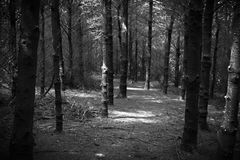 Just like a horror. Black and white, creepy, woods Stock Photos