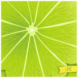 Just lime background Royalty Free Stock Photo