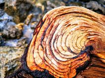 Just a log. stock photography