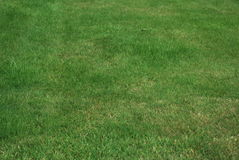 Just lush green garden grass Stock Photo