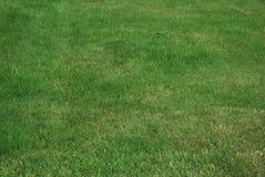 Just lush green garden grass Stock Photo