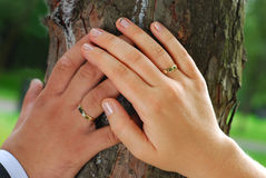 Just married. Hands of just married bride and groom with wedding rings based on the tree stock image