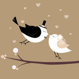 Just married birds Stock Image