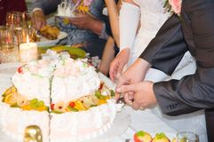 Just married are cuting the wedding cake Royalty Free Stock Photos