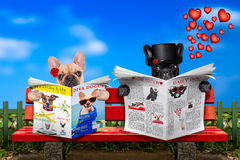 Just married dogs on a bench. Couple of two dogs reading a newspaper or magazine sitting on a bench at the park, just married or in a marriage on honeymoon royalty free stock photo