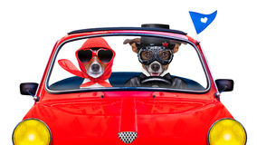 Just married dogs royalty free stock photography