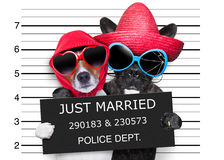 Just married mugshot royalty free stock photography