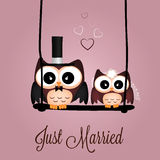Just married owls Stock Photos