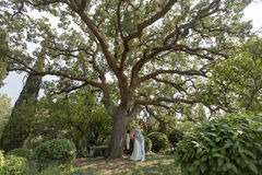Just married walking in park. Newly wedded couple under oak-tree. Just married walking in park in day of them wedding Stock Photography