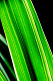 Just Naturally Green Royalty Free Stock Images
