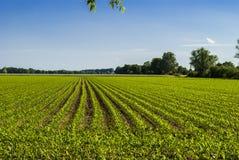 Just Nature. Corn field - horizon - bright sky Stock Photo