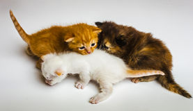 Just new born  kitten Royalty Free Stock Photo