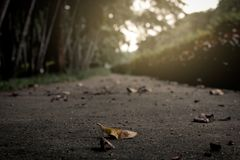 Just one leaf on the street stock image
