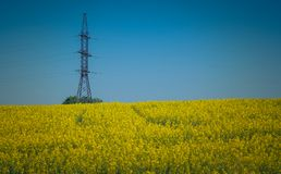 Colza. Just a photo of a colza fields blooming Royalty Free Stock Images