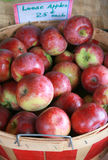 Just Picked Apples in Basket. At the farmers market, a bushel basket of freshly harvested apples for sale Stock Photo
