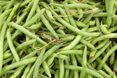 Just picked grean beans Stock Photography