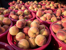 Just picked peaches in red baskets Royalty Free Stock Photography