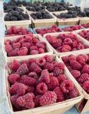 Just picked raspberries and blackberries Stock Photo