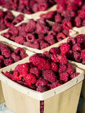 Just picked raspberries Royalty Free Stock Photo