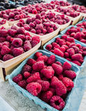 Just picked raspberries Royalty Free Stock Image