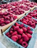 Just picked raspberries Royalty Free Stock Image