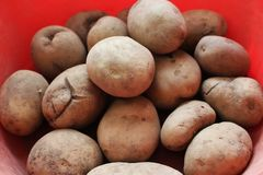 Just picked up potatoes royalty free stock photo