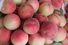 Just picking peaches in orchard Royalty Free Stock Photography