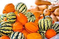Just Plain Squash. A variety of garden squash stock images