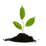 Just planted Stock Images